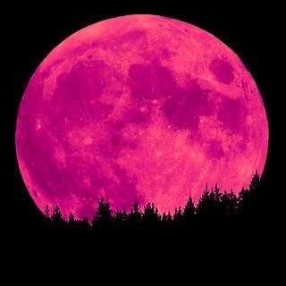 luna-roz